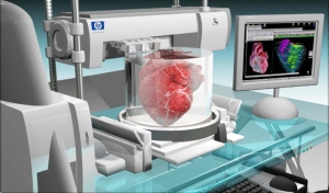 health-science-kidney-transplant-lab-grown--organ-inside1